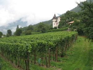 Weingut bei Neumarkt/Südtirol